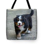Bernese Mountain Dog Puppy 2 Tote Bag