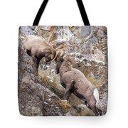 Bighorn Brawl Tote Bag by Michael Chatt