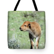 Bison Calf In Lamar Valley Tote Bag