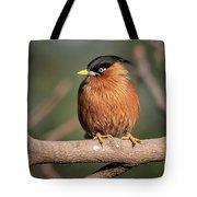 Bright Eye Tote Bag