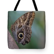 Brown Beauty Tote Bag by T A Davies