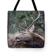 Bull Elk Grooms Himself Tote Bag