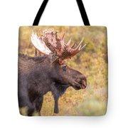 Bull Moose In Fall Colors Tote Bag