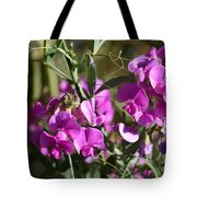 Bunch Of Pink Sweet Peas In The Sun Tote Bag