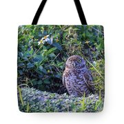 Burrowing Owl Tote Bag by Paul Schultz