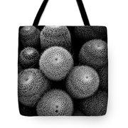 Cactus Black And White 5 Tote Bag