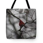 Cardinal On The Limb Tote Bag