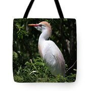 Cattle Egret With Breeding Feathers Tote Bag