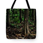 Cedar Trees Tote Bag