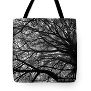 Cedars In The Mist Tote Bag