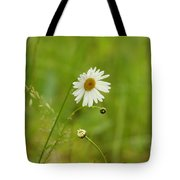 Chamomile Or Daisy? Tote Bag