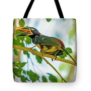 Chestnut-eared Araacari Tote Bag