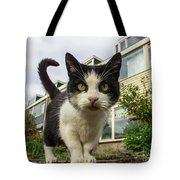 Close Up Cat On The Street Tote Bag