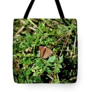 Common Buckeye Butterfly Tote Bag