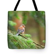 Common Chaffinch Fringilla Coelebs Tote Bag