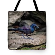 Common Grackle Tote Bag by Jeff Phillippi