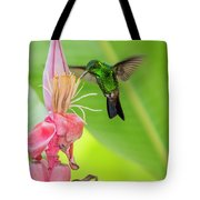 Copper Rumped Hummingbird Feeds On A Banana Flower Tote Bag by Rachel Lee Young