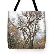 Cottonwood Az Bayou Leafless Tree Sky Clouds Path 31262019  Tote Bag