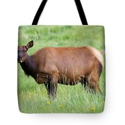 Cow Elk Grazing Tote Bag