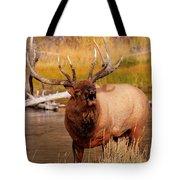 Creekside Bull Tote Bag