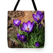 Crocus In Spring 2019 I Tote Bag