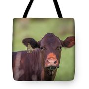 Curious Cow #636 Tote Bag by Tom Claud