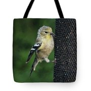 Cute Goldfinch At Feeder Tote Bag