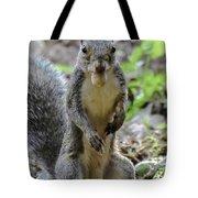 Cute Squirrel Tote Bag