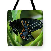Eastern Black Swallowtail - Closed Wings Tote Bag