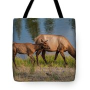 Elks Grazing On The Madison River, Wy Tote Bag by Lon Dittrick