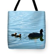 Eurasian Coot And Offspring In Ria Formosa. Algarve, Portugal Tote Bag
