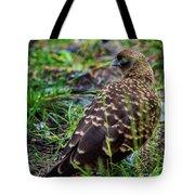 Falcon Chimango Caracara, Tierra Del Fuego National Park, Ushuaia, Argentina Tote Bag