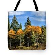 Fall Aspen Tote Bag by Michael Chatt