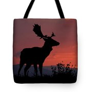 Fallow Stag At Sunset Tote Bag