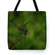 Female Blue Dasher Dragonfly Tote Bag