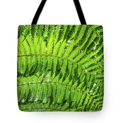 Fern Tote Bag by Nick Bywater