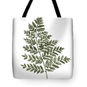 Fern Twig Illustration Grey Plant Watercolor Painting Tote Bag