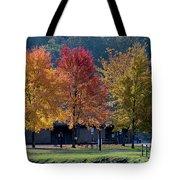 Four Tree Lineup Tote Bag by Dan Friend
