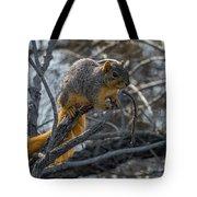Fox Squirrel - 8988 Tote Bag