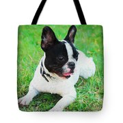 French Bulldog Puppy In The Grass - Painted Tote Bag by Ericamaxine Price