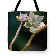 Ghost Plant Succulent Tote Bag