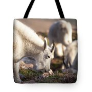 Grazing On Mount Evans Tote Bag