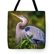 Great Blue In Mating Plumage Tote Bag by Tom Claud