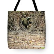 Great Bowerbird With Nut Tote Bag