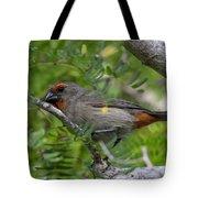 Greater Antillean Bullfinch Tote Bag by Thomas Kallmeyer