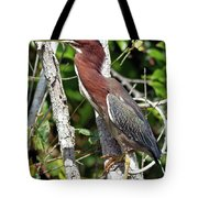 Green Heron In The Glades Tote Bag