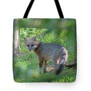 Grey Fox Near A Fence Looking Back Tote Bag by Dan Friend