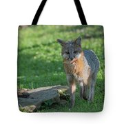 Grey Fox With Food In His Mouth Tote Bag by Dan Friend