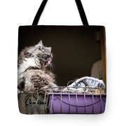 Grey Long Haired Cat Sitting On A Window Sill Tote Bag