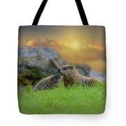 Groundhog Morning Tote Bag by Bob Orsillo